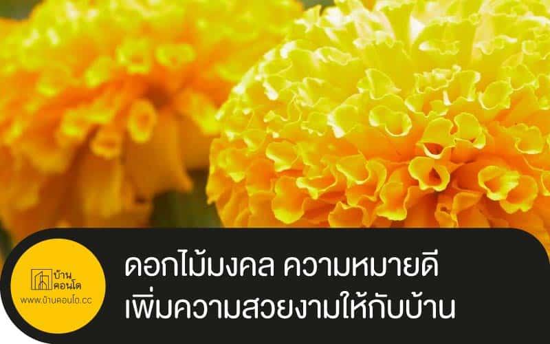 ดอกไม้มงคล ความหมายดีเพิ่มความสวยงามให้กับบ้าน