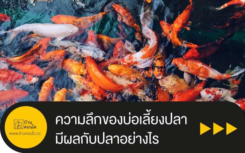 การแต่งสวน : ความลึกของบ่อเลี้ยงปลามีผลกับปลาอย่างไร