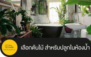 เลือกต้นไม้ สำหรับปลูกในห้องน้ำ